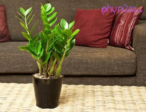 Đừng đặt những loại cây này trong nhà ngày Tết nếu không muốn xui xẻo cả năm - Ảnh 3