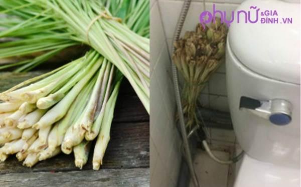 Đập dập bó sả đặt trong nhà vệ sinh, ai cũng bất ngờ với điều kỳ diệu xảy ra sau đó - Ảnh 1