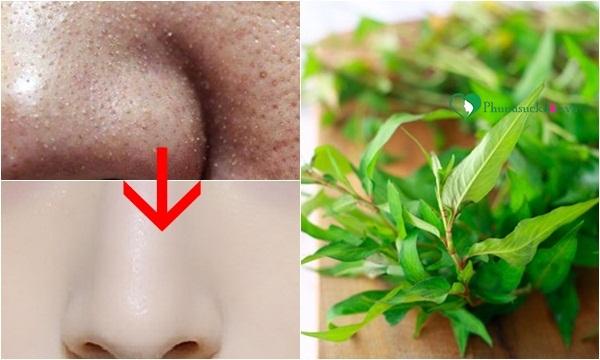 Cách làm se khít lỗ chân lông nhanh nhất bằng rau răm