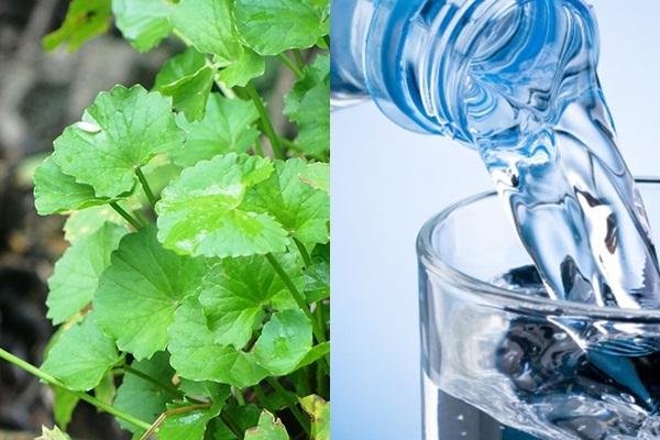 Sử dụng nước rau má thay nước lọc sẽ gây hại cho sức khỏe - Ảnh: Internet