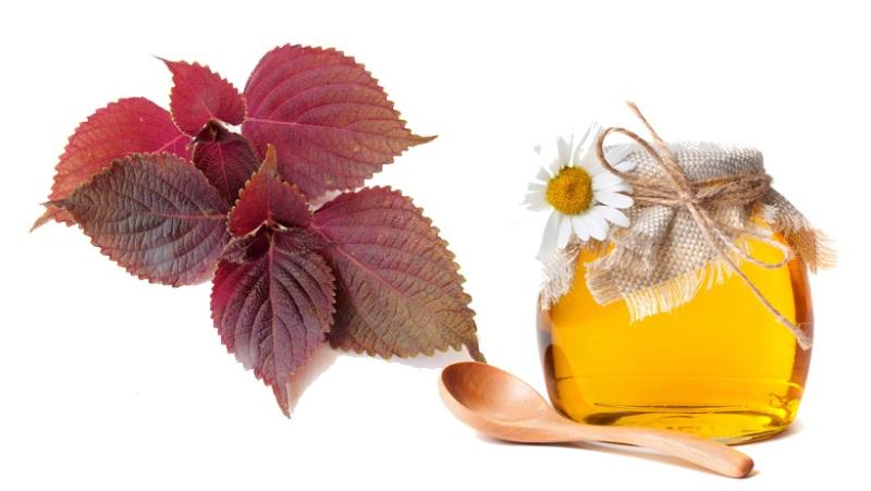 Tắm trắng với lá tía tô và mật ong hiệu quả