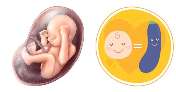 Quá trình phát triển của thai nhi qua từng mốc quan trọng - Ảnh 5