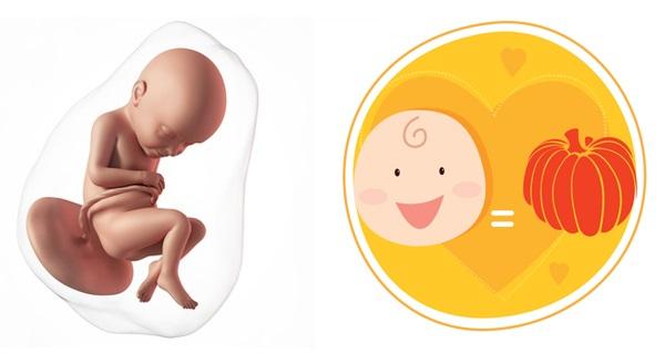 Quá trình phát triển của thai nhi qua từng mốc quan trọng - Ảnh 6