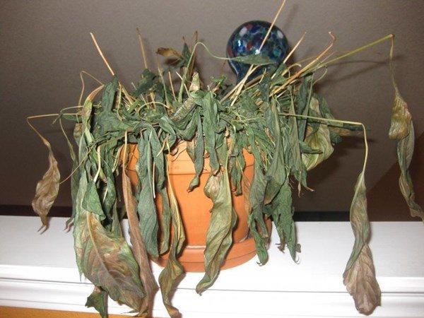 Tối ngày Rằm nhớ vứt ngay thứ này để lộc lá đầy nhà, càng làm càng vượng - Ảnh 1
