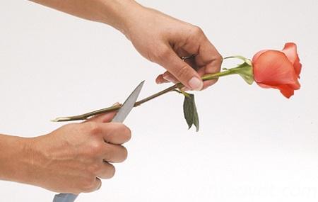 cach giu hoa tuoi lau 2