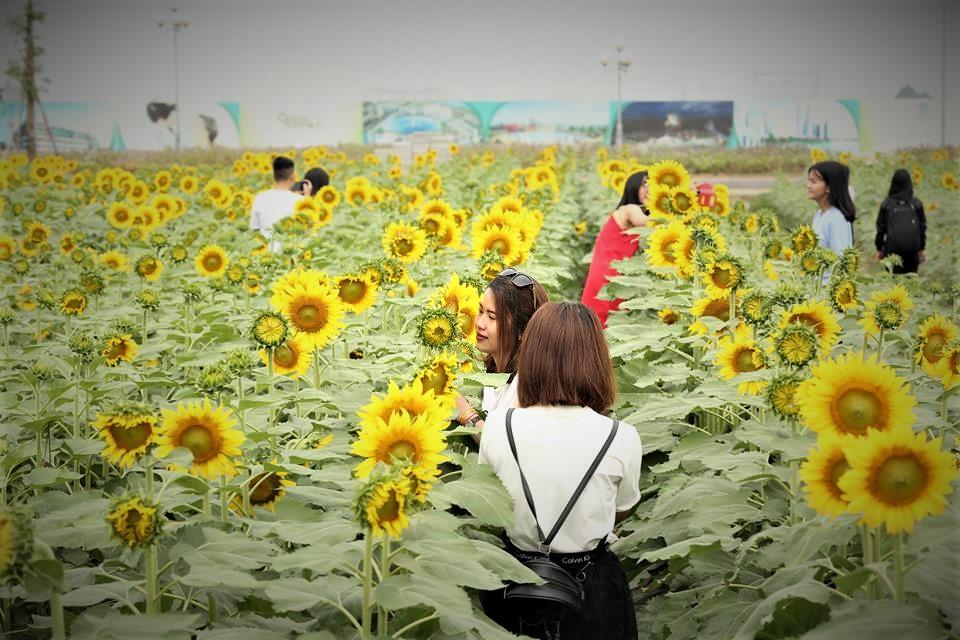 Nếu cuối tuần không di du lịch, cả gia đình bạn nên đến cánh đồng hoa hướng dương tuyệt đẹp giữa Sài Gòn chụp ảnh  - Ảnh 3