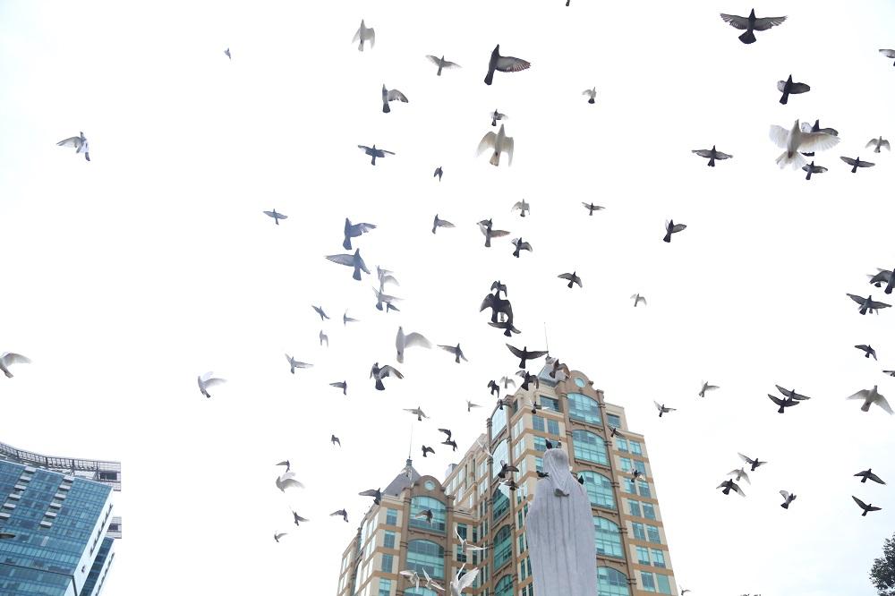 Đường phố Sài Gòn vắng xe, yên bình ngày đầu năm mới 2019 - Ảnh 11
