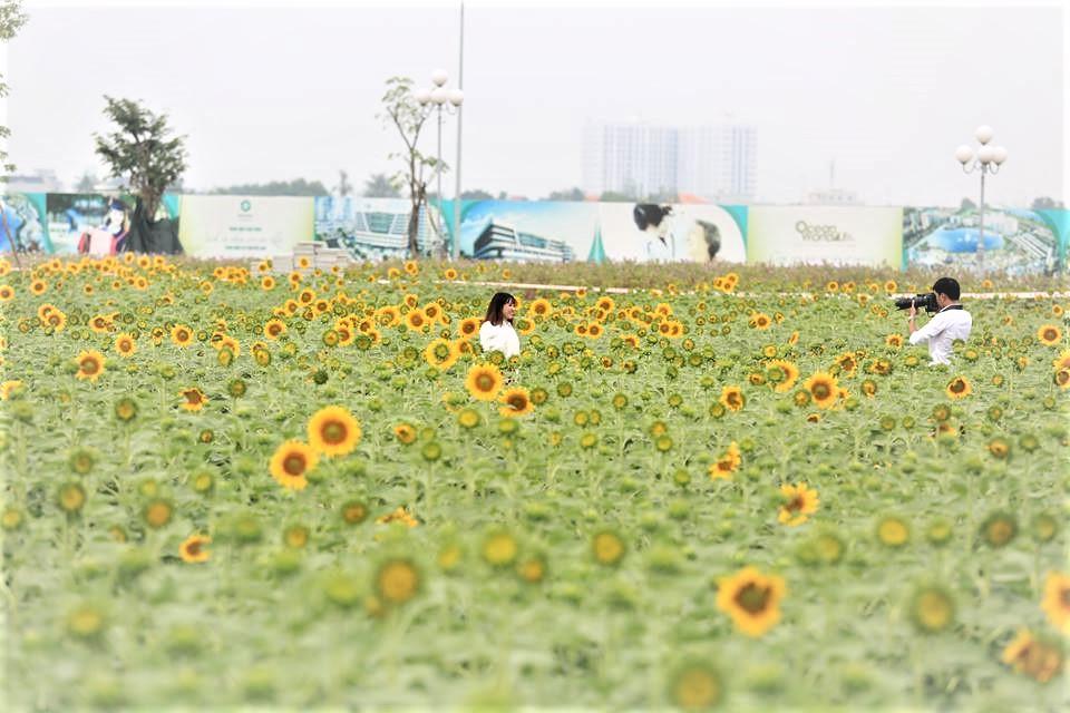 Nếu cuối tuần không di du lịch, cả gia đình bạn nên đến cánh đồng hoa hướng dương tuyệt đẹp giữa Sài Gòn chụp ảnh  - Ảnh 5