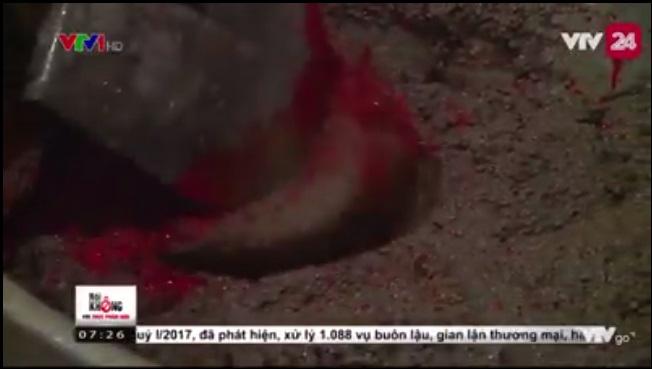 Rợn người với cảnh chế biến cua xay bẩn kinh hoàng, ai hay ăn bún riêu sẽ sợ mất vía - Ảnh 4