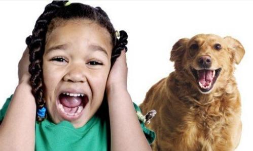 Hội chứng tâm lý sợ hãi ở những đứa trẻ từng bị chó cắn - Ảnh 1