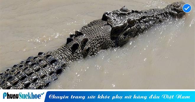 Mổ bụng cá sấu, phát hiện thi thể bé trai 8 tuổi