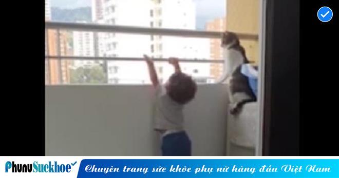 Bất ngờ nhìn chú mèo có hành động quyết đoán khi em bé bám vào lan can, người xem phát thốt lên quá thông minh
