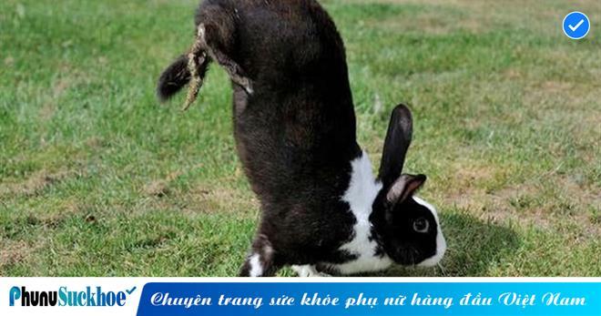 Cộng đồng mạng thích thú nhìn chú thỏ chỉ có thể di chuyển kiểu TRỒNG CHUỐI, nhưng BÍ MẬT thật sự khiến ai cũng bất ngờ và THƯƠNG CẢM