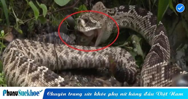 Đang lang thang kiếm ăn, SÁT THỦ vùng nhiệt đới TRÚNG MÁNH khi phát hiện đàn cá sấu con không có mẹ BẢO VỆ và cái kết