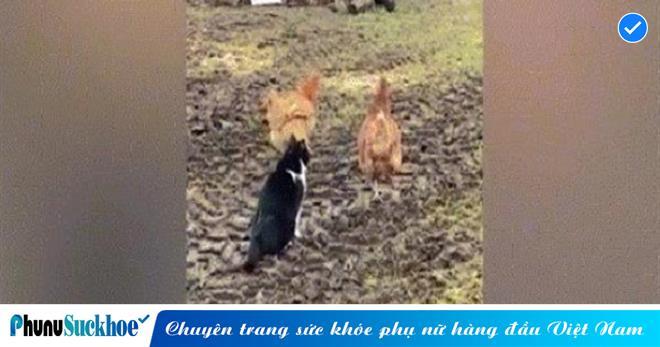 Thấy bạn bị mèo VỒ, gà mái LIỀU MÌNH xông vào TUNG ĐÒN HIỂM cứu nguy và cái kết