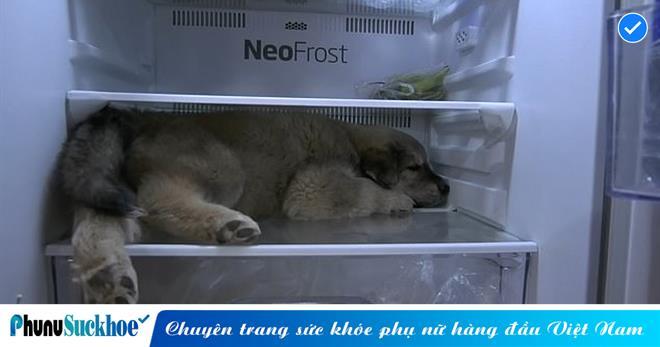 Trời nóng như đỏ lửa, chú chó thông minh có cách 'giải nhiệt' khiến ai cũng phải... câm nín