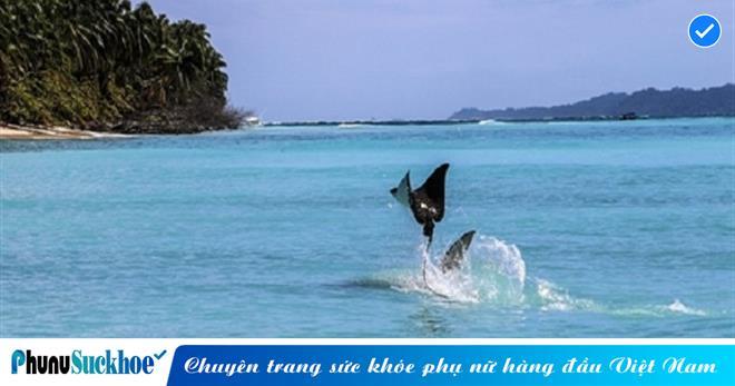 Cá đuối dùng thủ thuật 'phi thân' khi bị cá mập khổng lồ truy sát, nhờ khả năng 'bay' của mình mà nó thoát chết