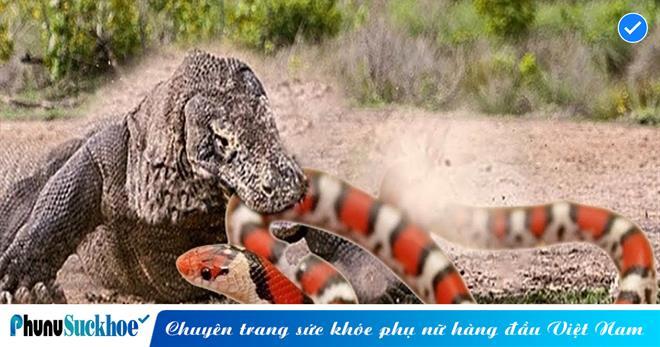 Đang thả mình tắm suối thì gặp 'HUNG THẦN' xuất hiện, rắn độc đành bỏ mạng bởi kẻ to con