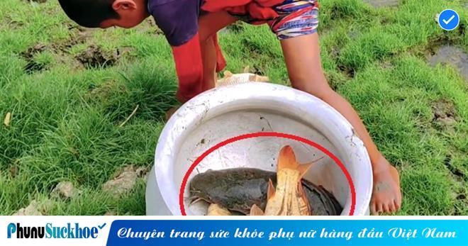Khi cơn mưa vừa dứt hạt, cậu bé 7 tuổi mang thau ra đồng bắt cá, cái kết khiến ai thấy cũng trầm trồ khen ngợi