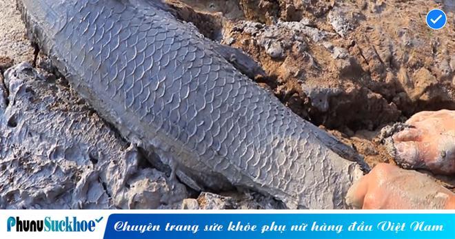 'QUÁI NGƯ' chỉ cần đi trên mặt đất là có thể phát hiện cá ở bên dưới, càng đào sâu càng bắt cá khủng