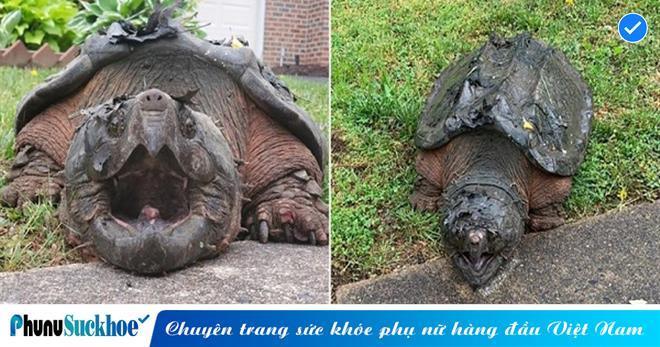 'Rùa yêu quái' xuất hiện trên đường phố với hình dáng kỳ lạ, vẻ ngoài không khác gì khủng long thời tiền sử