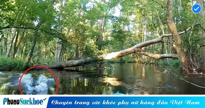 Đang chèo thuyền Kayak trên sông, người đàn ông THÓT TIM tột độ vì màn ghé thăm bất ngờ từ con 'THỦY QUÁI ĐẦM LẦY'
