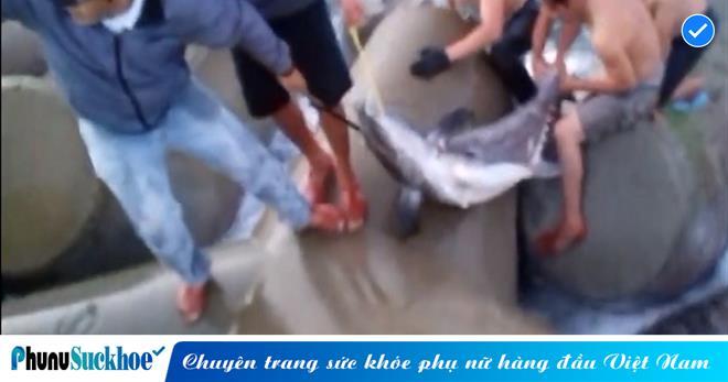 Ngư dân bất ngờ câu dính 'thủy quái' khổng lồ nặng 50kg và dài gần 1,5 mét khi đi ven bờ biển, phải 5 người mới kéo được lên bờ