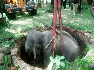 Chuyện hy hữu: Voi Ấn Độ bị chó đuổi ngã xuống giếng sâu 15 mét và cuộc giải cứu ly kỳ