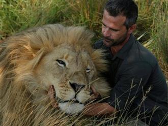Lạnh người trước khoảnh khắc người đàn ông nằm giữa bầy chúa sơn lâm, thân thiện như vật nuôi trong nhà