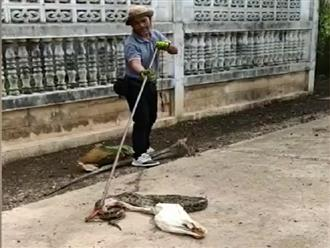 Trăn khủng bị mắc kẹt trong hàng rào vì ăn phải con mồi quá to, cảnh tưởng giải cứu vật nuôi của người đàn ông còn kinh hoàng hơn