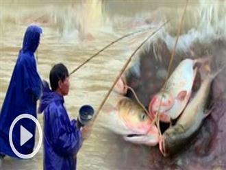 Săn cá 'khủng' dưới chân hồ Kẻ Gỗ