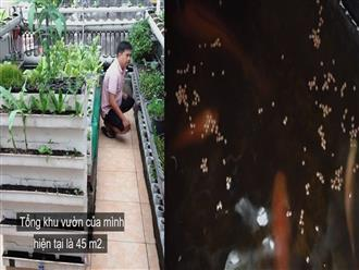 Vườn rau, bể cá khép kín trên sân thượng