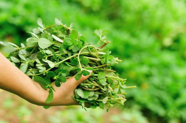 4 thực phẩm ví như nguồn 'insulin tự nhiên', Việt Nam rất nhiều và rẻ - Ảnh 1