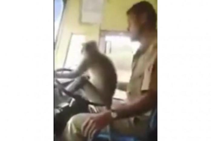 Chú khỉ được ưu ái trao quyền làm chủ chiếc xe
