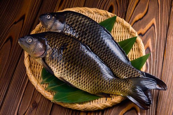 5 lí do nên ăn cá diếc thường xuyên - Ảnh 1