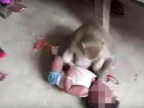 Kinh hoàng clip khỉ vào nhà bắt cóc trẻ em  - Ảnh 1