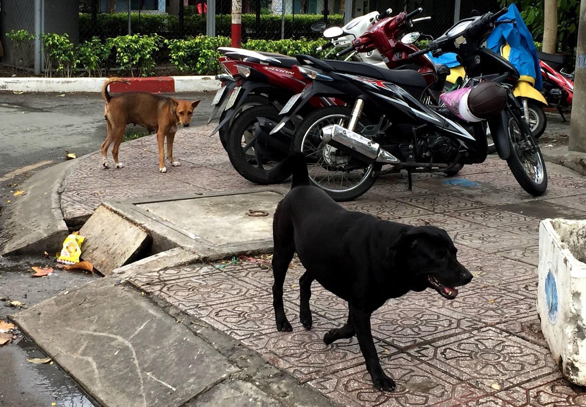 Hiểm họa chó thả rông, không rọ mõm ở Sài Gòn - Ảnh 3