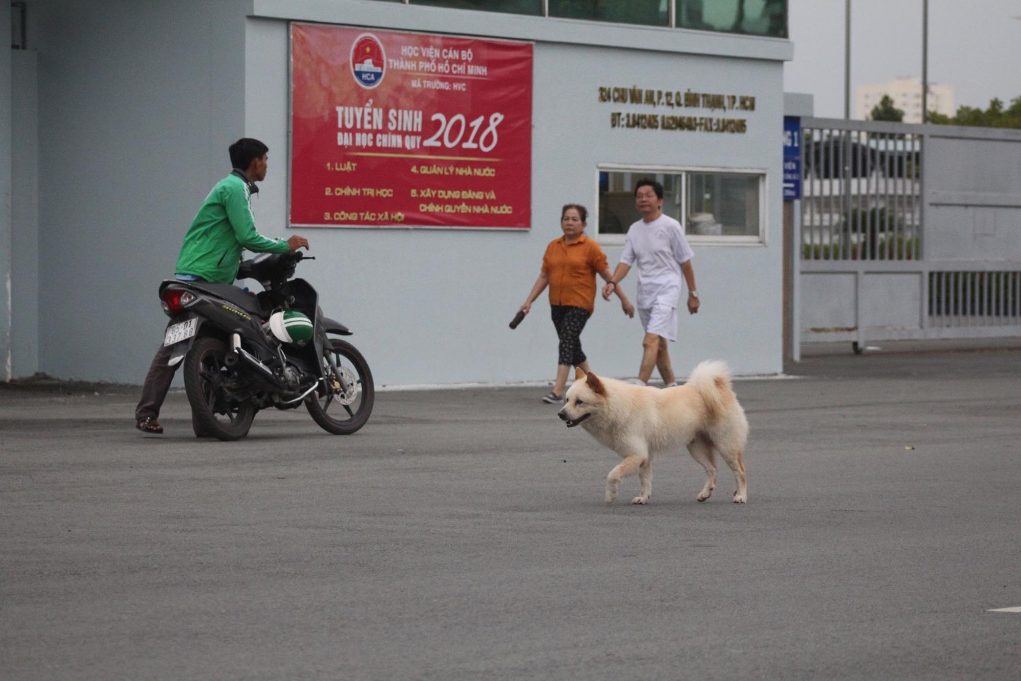 Hiểm họa chó thả rông, không rọ mõm ở Sài Gòn - Ảnh 1
