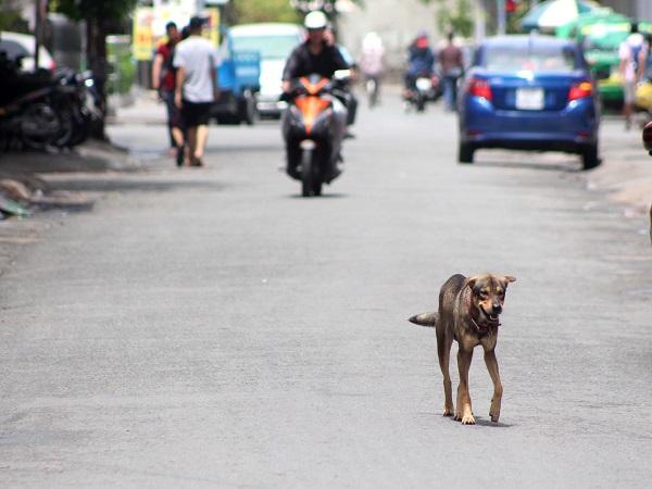 Hiểm họa chó thả rông, không rọ mõm ở Sài Gòn - Ảnh 2