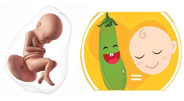 Sự phát triển của thai nhi 30 tuần - Ảnh 1