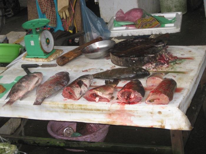 Nhận biết thịt lợn và cá có chứa độc tố bằng mắt thường - Ảnh 2