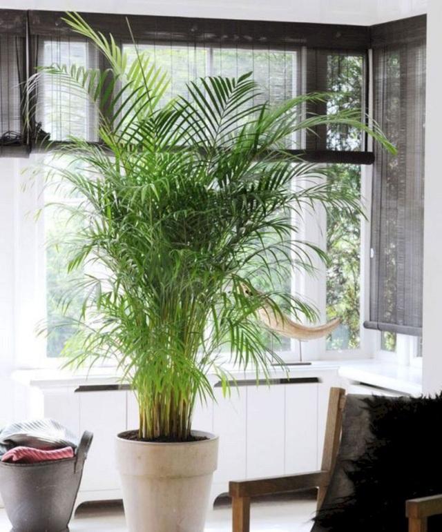 Trồng ngay 5 loại cây này trong nhà, vừa hút khí độc vừa làm đẹp không gian - Ảnh 3