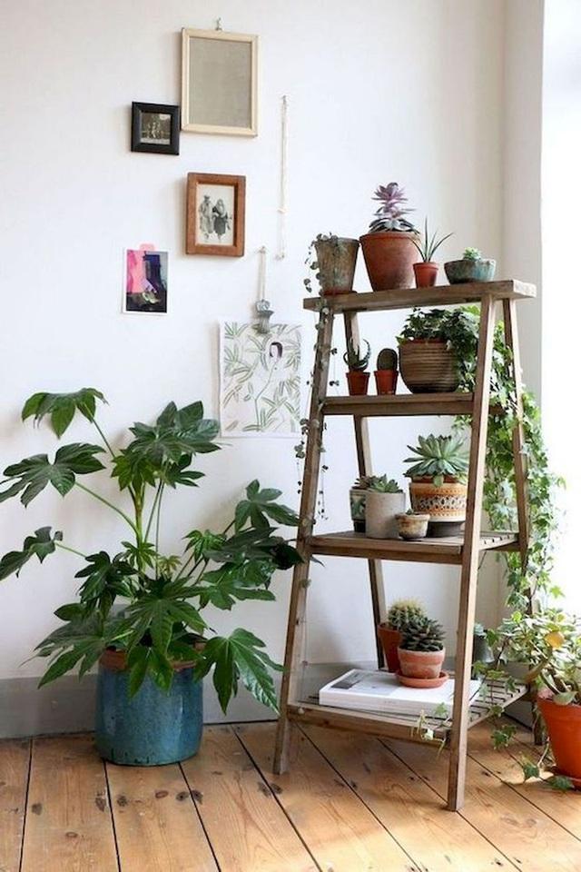 Trồng ngay 5 loại cây này trong nhà, vừa hút khí độc vừa làm đẹp không gian - Ảnh 1