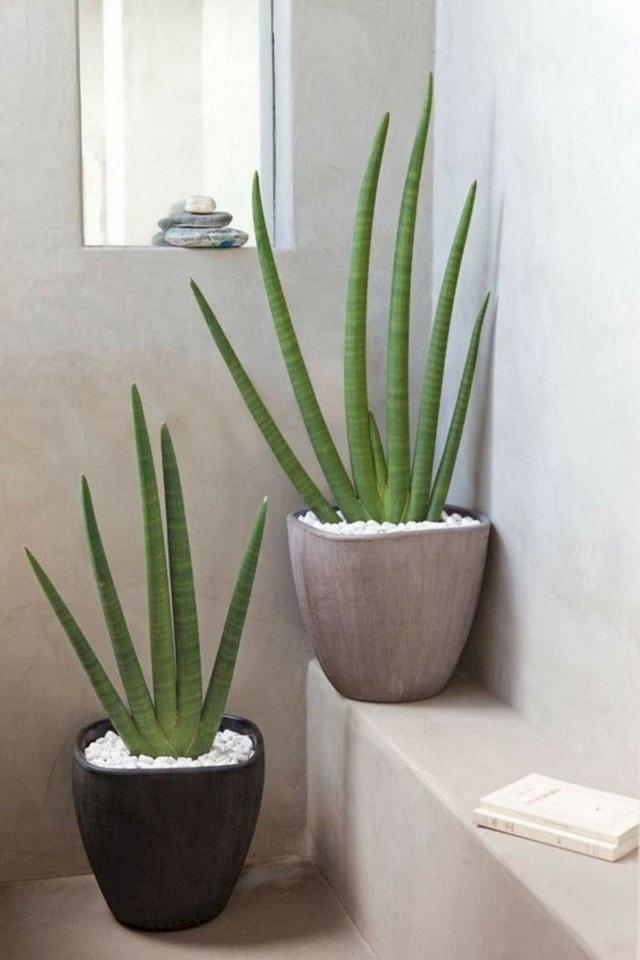 Trồng ngay 5 loại cây này trong nhà, vừa hút khí độc vừa làm đẹp không gian - Ảnh 5