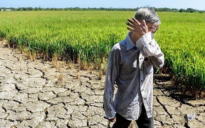 Xót xa trước cảnh hạn mặn miền Tây khiến nhà nông điêu đứng, sao Việt đau lòng bật khóc và chung tay cứu trợ - Ảnh 1