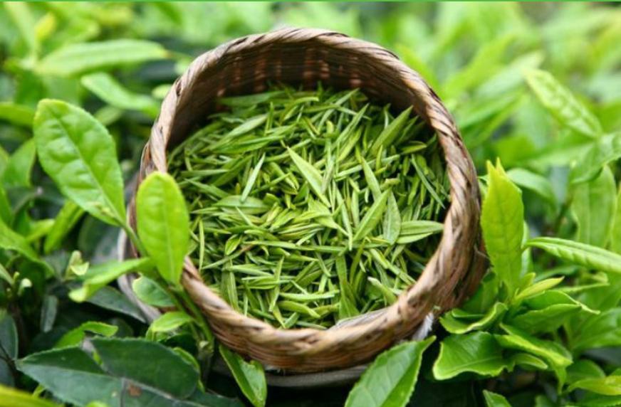 Những điều cần biết để phát huy tác dụng của trà xanh đối với sức khỏe của bạn - Ảnh 9