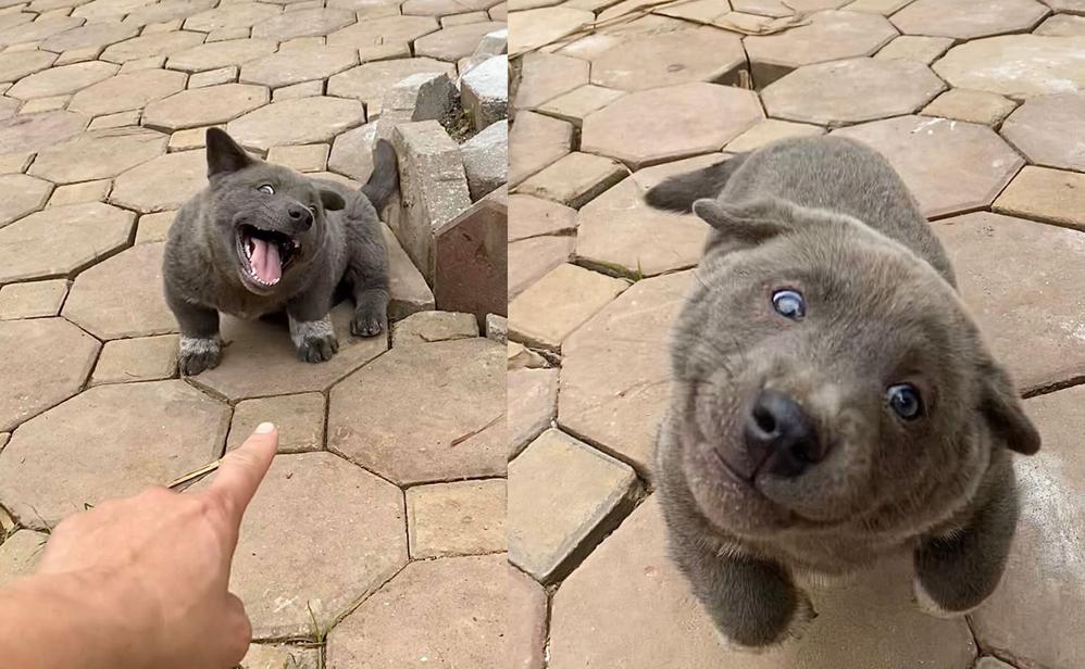 2 chú chó 'cưng muốn xỉu' mỗi lần xuất hiện nổi như 'idol' mới của giới trẻ - Ảnh 6