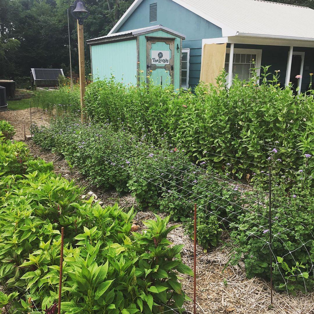 Cô gái trẻ trồng cả vườn rau và hoa theo phương pháp hữu cơ vì yêu thích sống trong không gian xanh - Ảnh 12