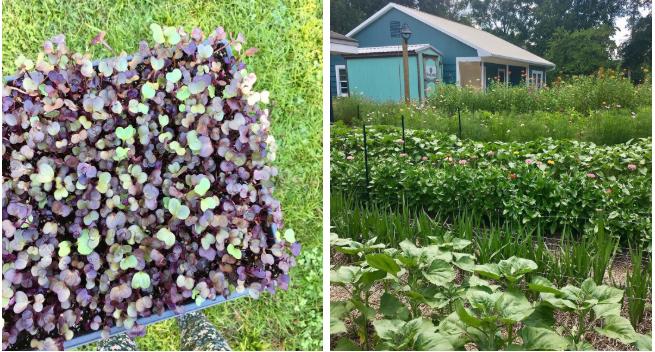 Cô gái trẻ trồng cả vườn rau và hoa theo phương pháp hữu cơ vì yêu thích sống trong không gian xanh - Ảnh 16