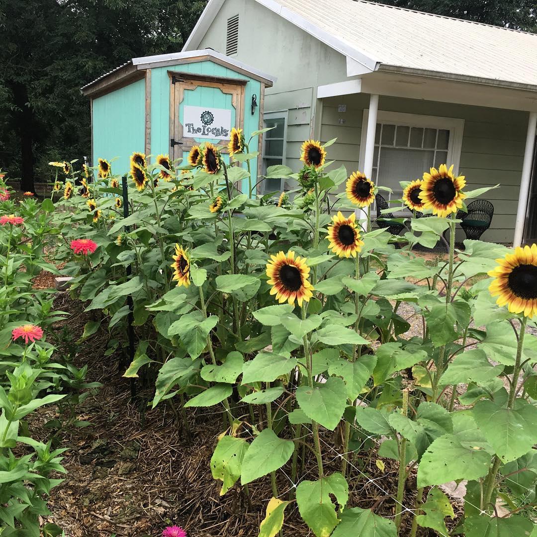 Cô gái trẻ trồng cả vườn rau và hoa theo phương pháp hữu cơ vì yêu thích sống trong không gian xanh - Ảnh 3